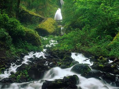 Nature Desktop Wallpapers || Best Background Scenery