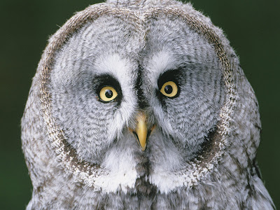 Download Cute Wallpapers For Pc Cute Birds Eagle Amp Owl Images Collections Of Eagle