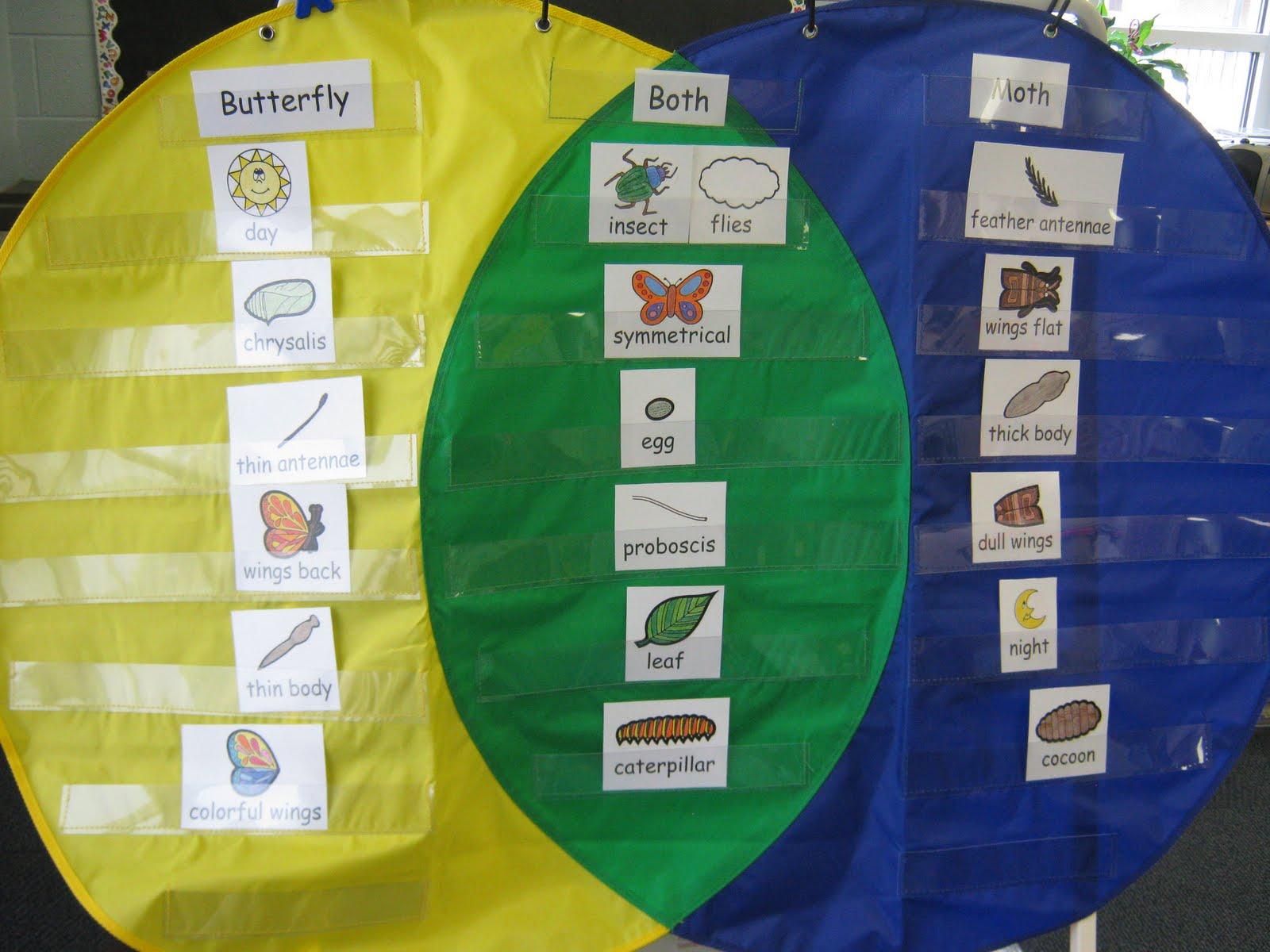hight resolution of kindergarten activity venn diagram