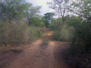 Melagiri Landscape