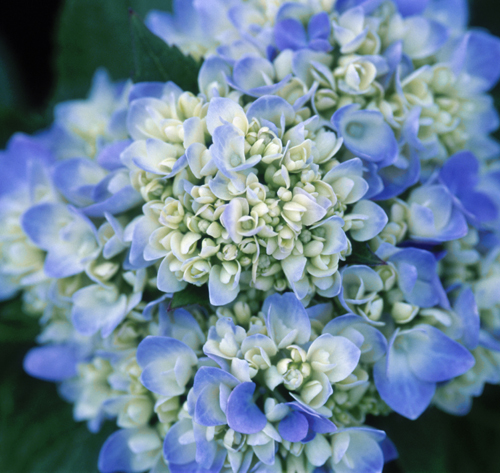 LIVING THE GARDENING LIFE: Solutions for Underblooming ...