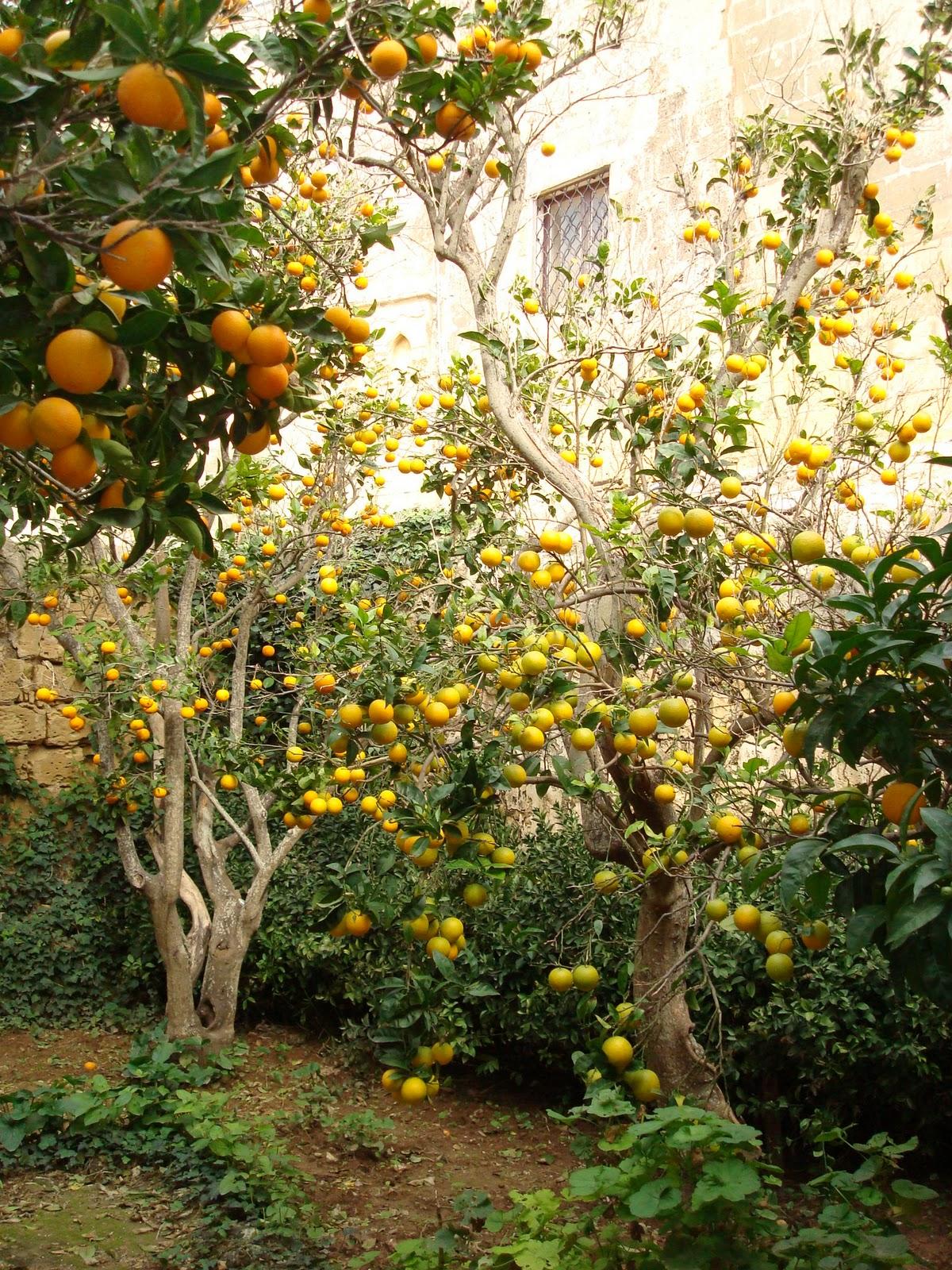 Christine's Chatter: In a Maltese garden