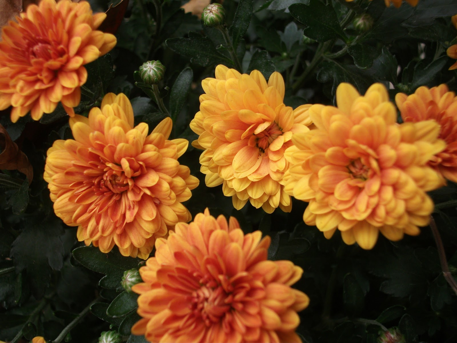 How To Keep Flowers Fresh Overnight Over The Backyard Fence Autumn Musings