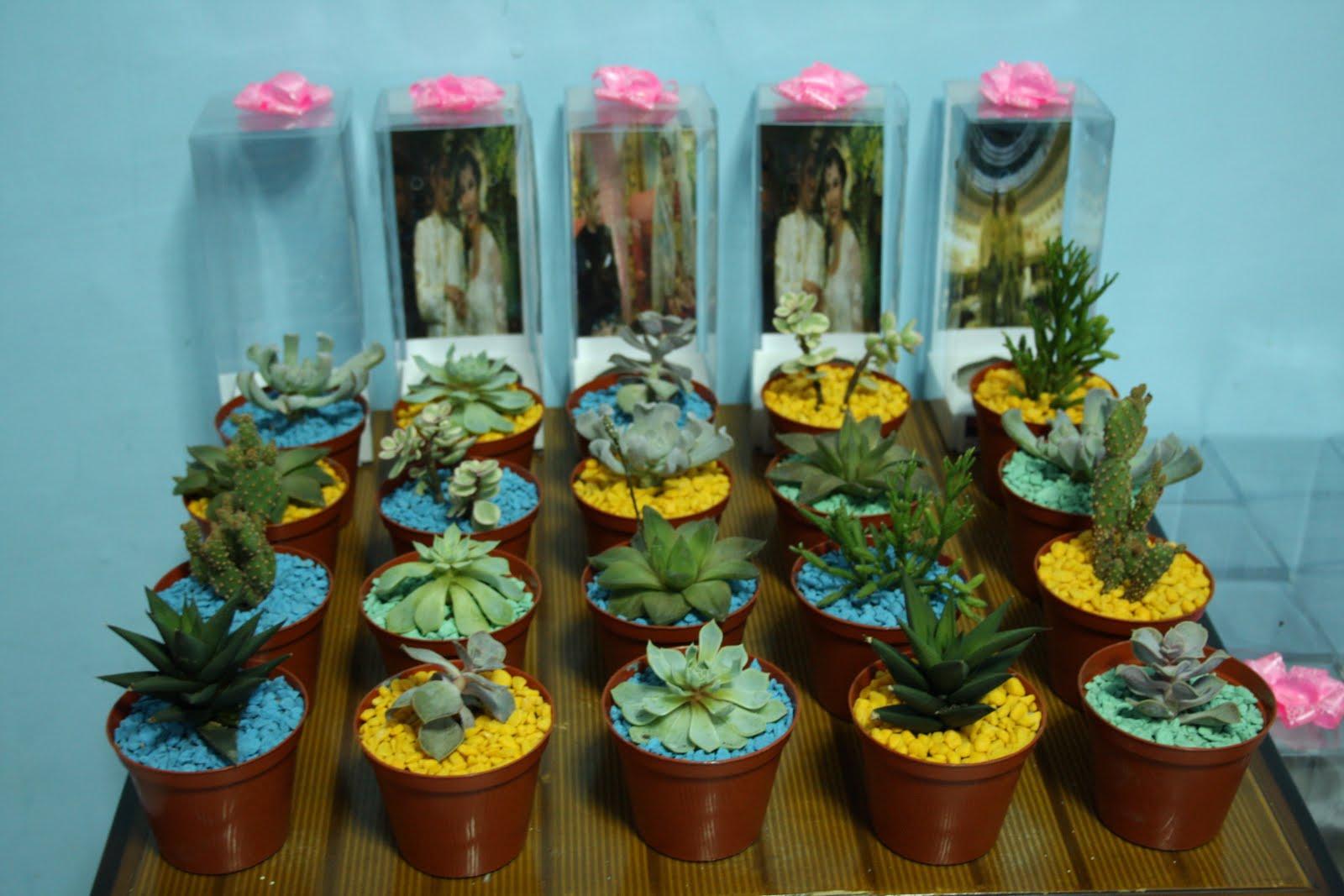 Adjie Kaktus Jenis Kaktus Sekulen