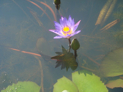 Water And Flower