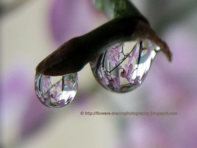 Raindrops on orchids