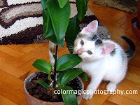 Kitty chewing orchid leaves