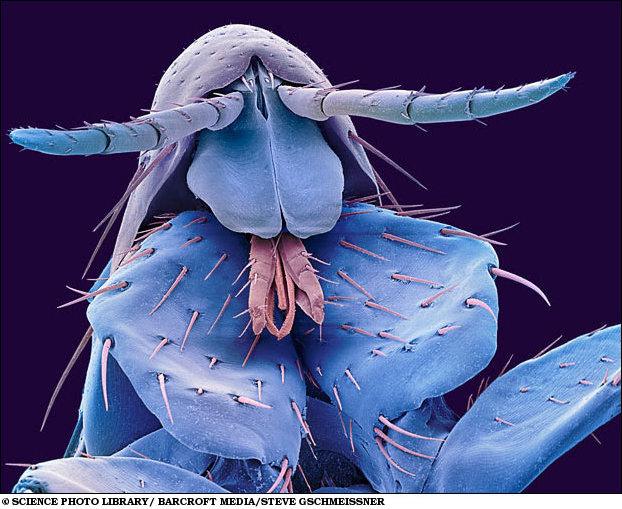 هذه الصور المجهرية