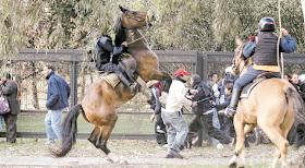 incomodidad del caballo haiti youtube