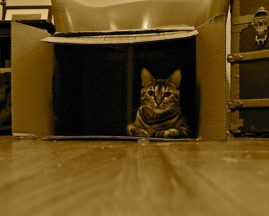 94bbdfd97 Gato   En una caja de cartón (capítulo 3)