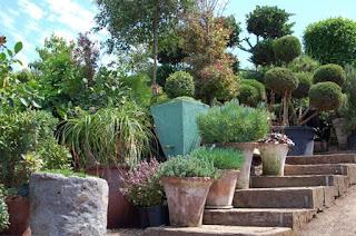 gradina cu ghivece, trepte in gradina, arbusti tunsi