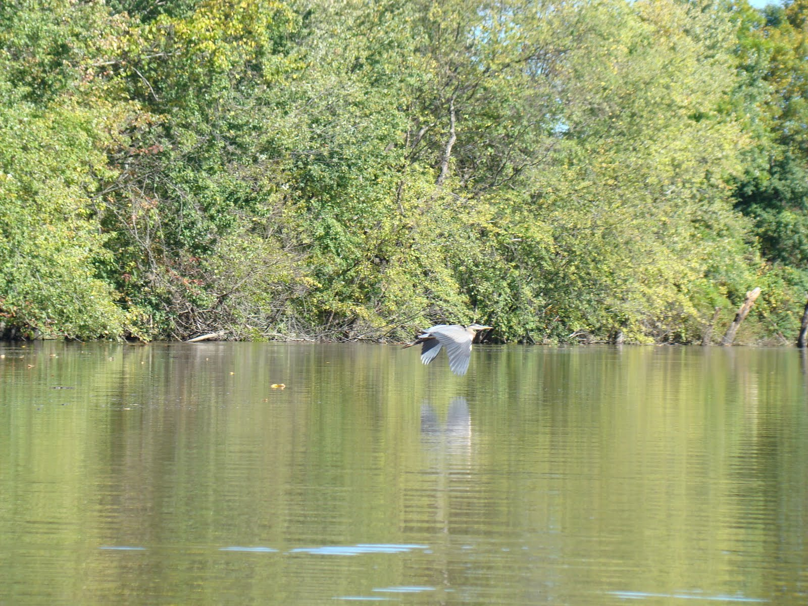 Kayak Northeast: Wallkill River (New Paltz to Covered Bridge (Rt 32