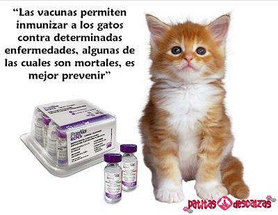 Vacuna giardia gatos, Vacuna giardia canina