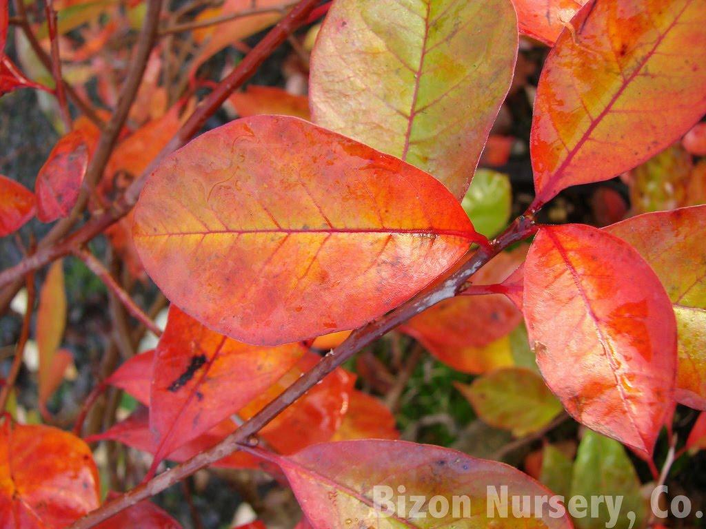 Tree Identification March