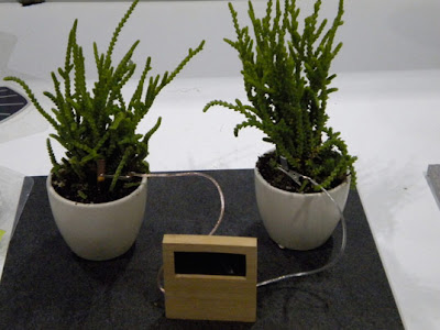 Water Plants To Keep The Clock Ticking