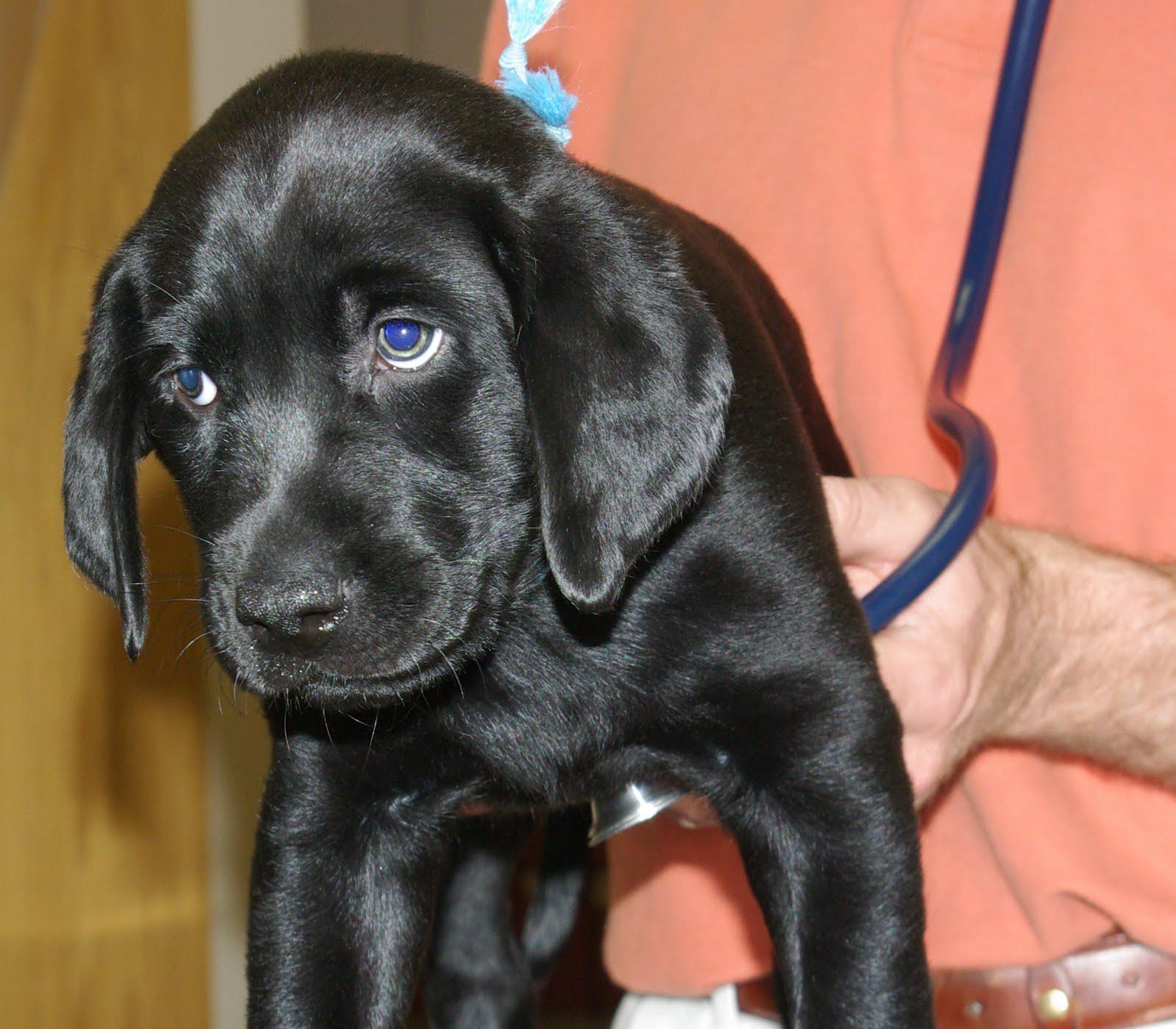9 week old puppy recessed vulva