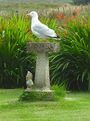 Do we need a bigger bird bath?