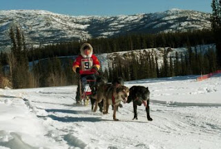 gara di Dog Mushing