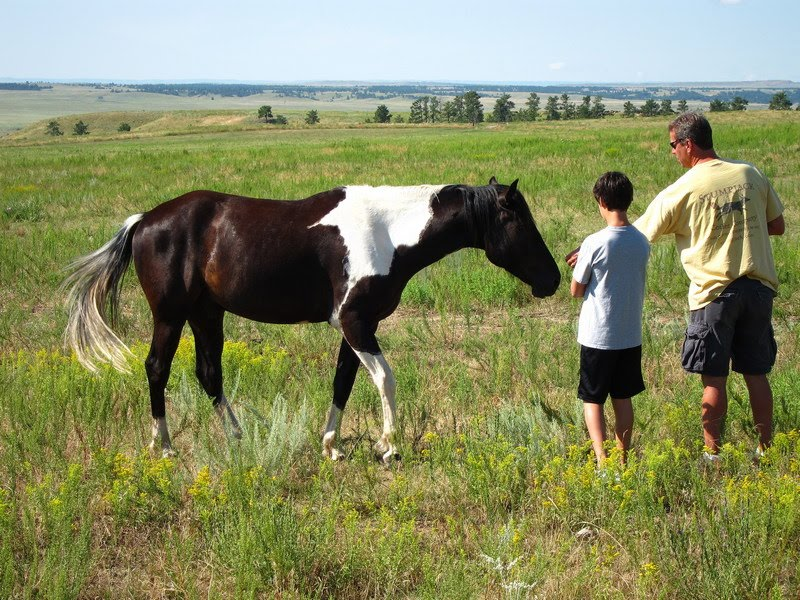 Ken and Lee's RV Adventures: Black Hills Wild Horse