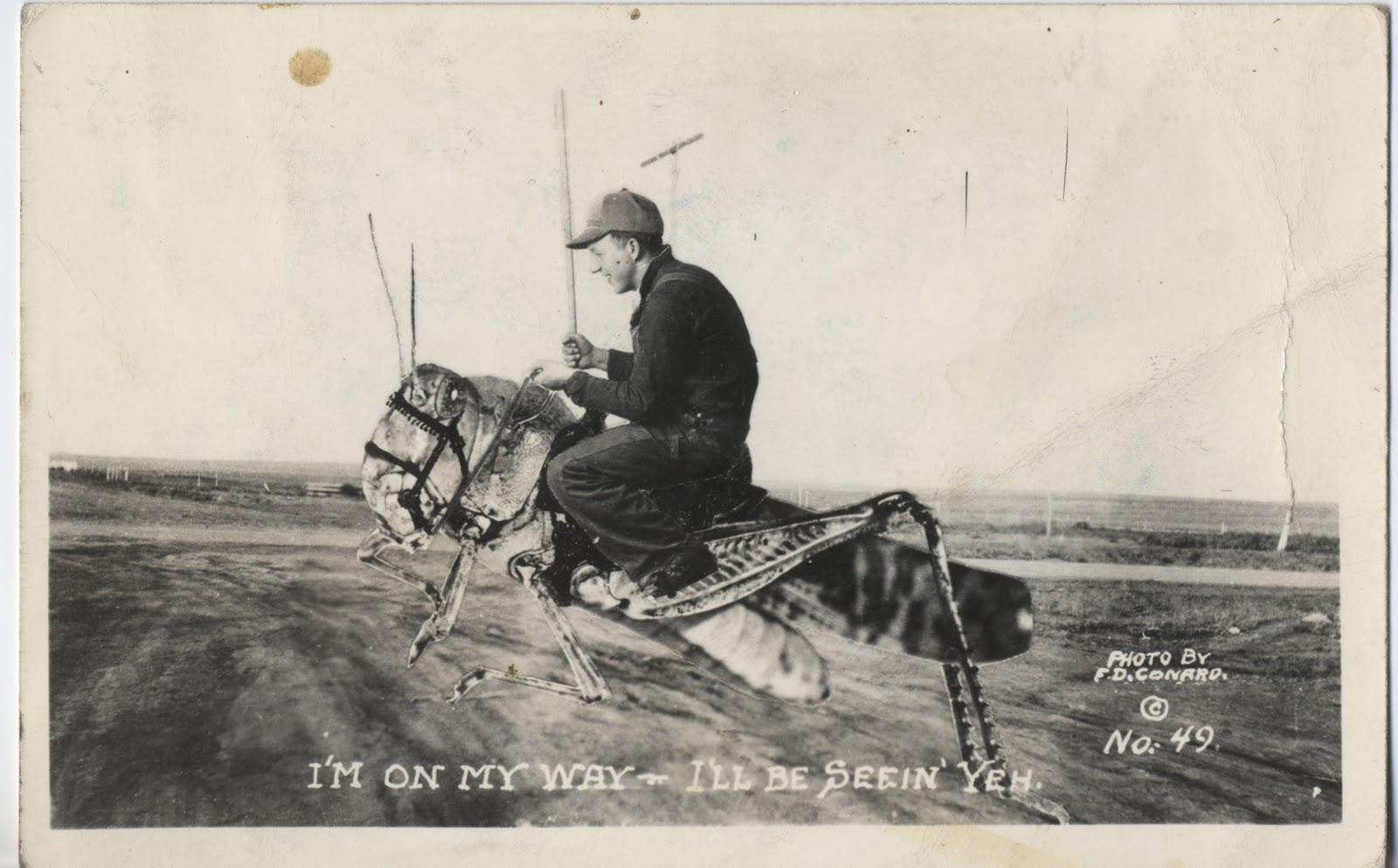Postcards, etc.: Grasshopper Cowboy