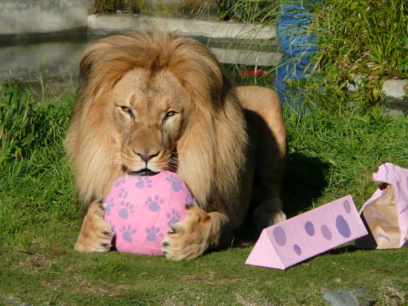 С днем рождения лев картинки необычные