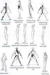 La Educación Física Y El Control Corporal Cadenas Musculares