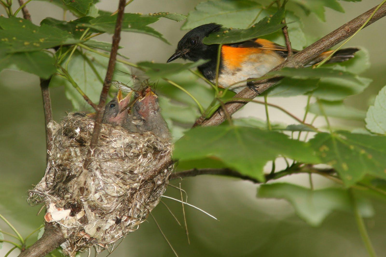 June 2010 in Eagles Nest