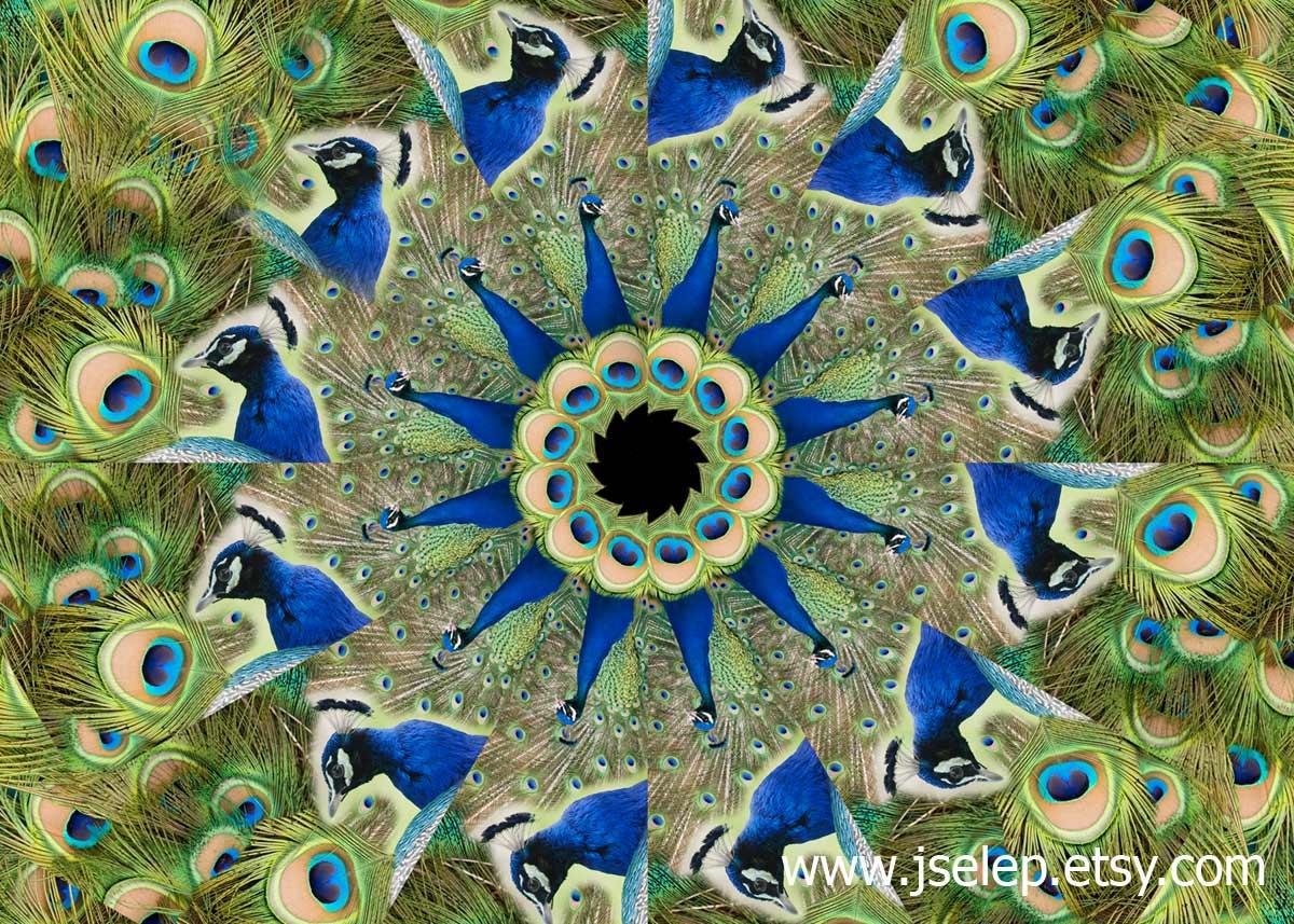 Peacock Kaleidoscope Mandala by Jeanne Selep Imaging