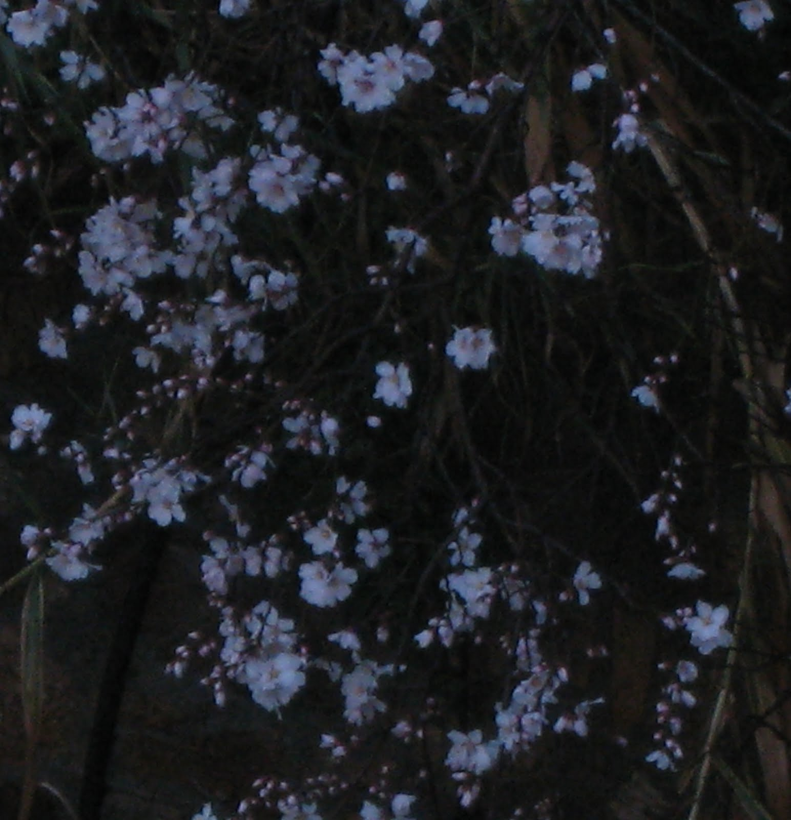 Giardino Cosa Piantare A Febbraio: Fiori Del Mio Giardino: RIFIORIRE