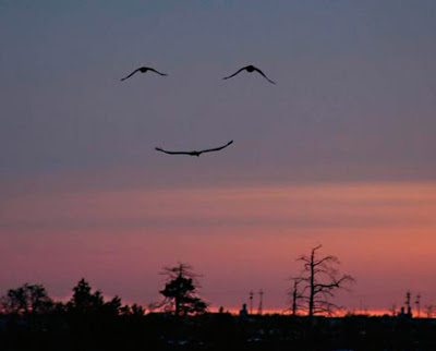 Resultado de imagen para alegria de vivir