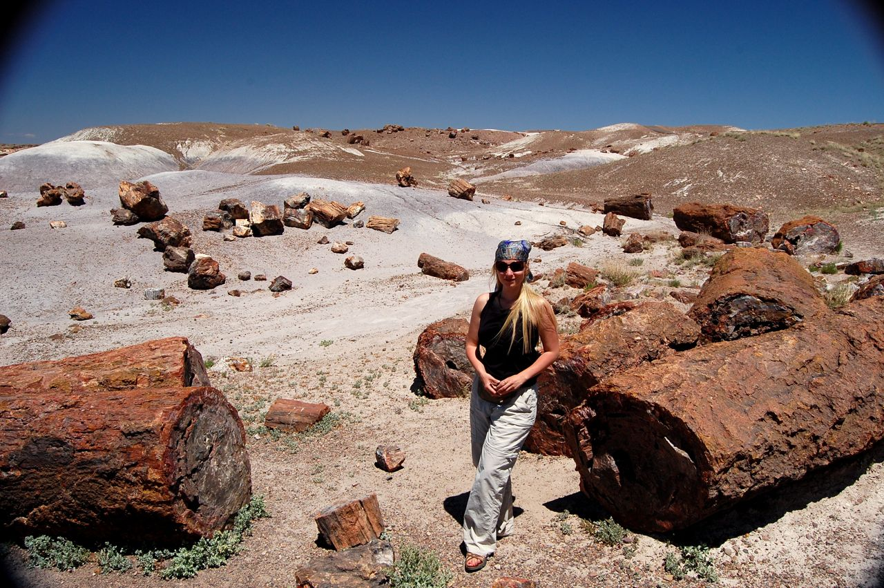 crazy little thing called blog petrified forest np