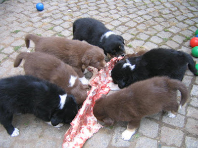 Raw Food Diet For Pitbull Puppies