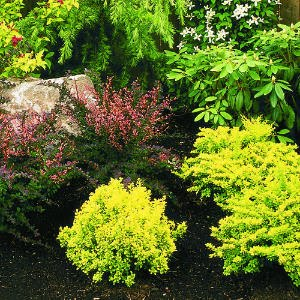 Canadiangardenjoy Lust List For Shrubs And A Question