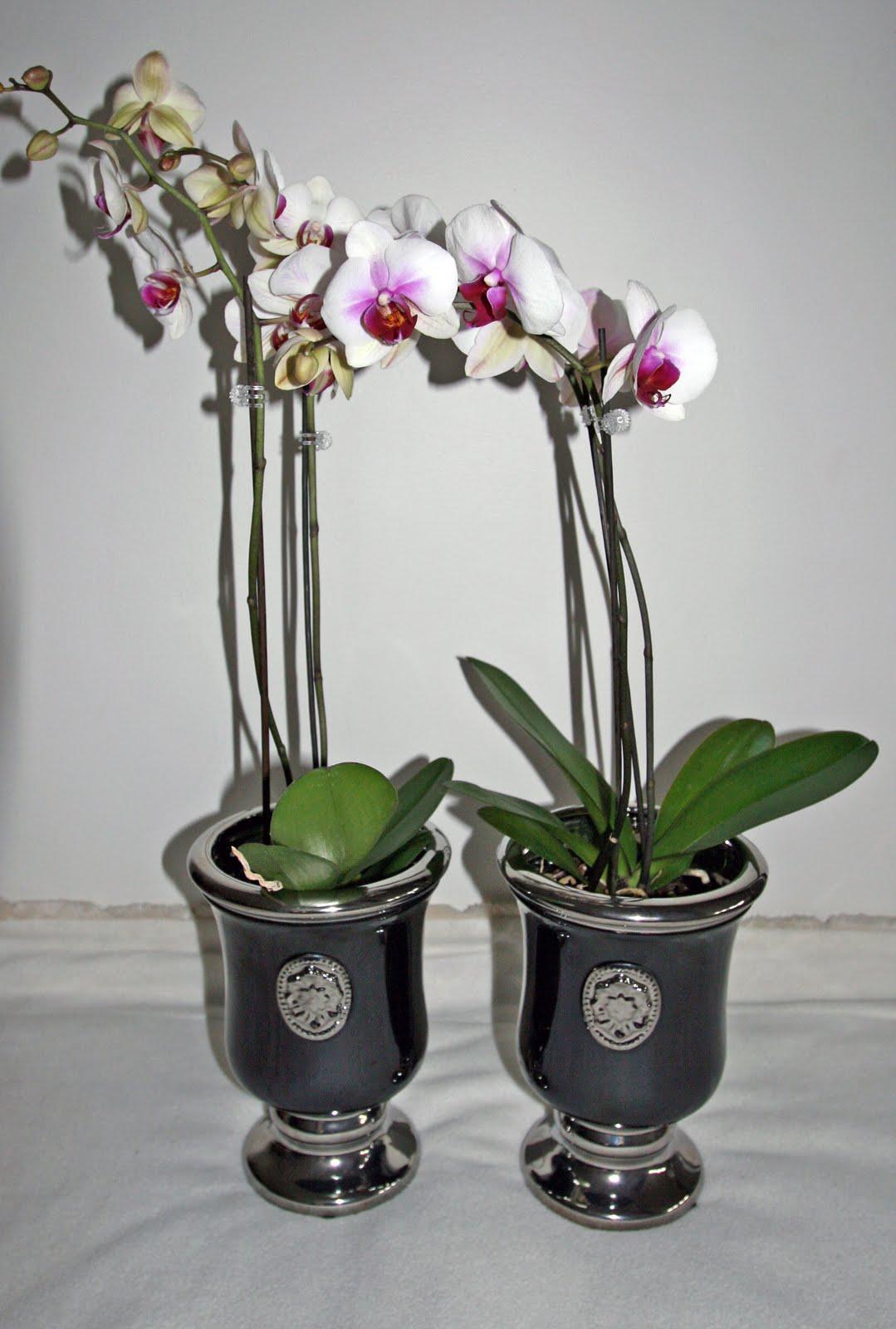 Potter til orkideer
