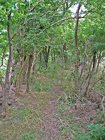 the former Braughing to Great Chesterford Roman Road, now just an overgrown track between two hedges that leads out to the M11.
