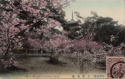 Cherry blossom in Ninnaji Temple, Omuro Kaikan Kobe, Japan - anno 1906