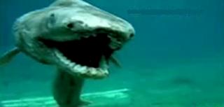 Tiburón prehistórico