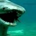 Hallaron un tiburón prehistórico vivo