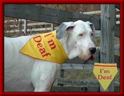 K 9 Solutions Dog Training Inc Training The Deaf Dog