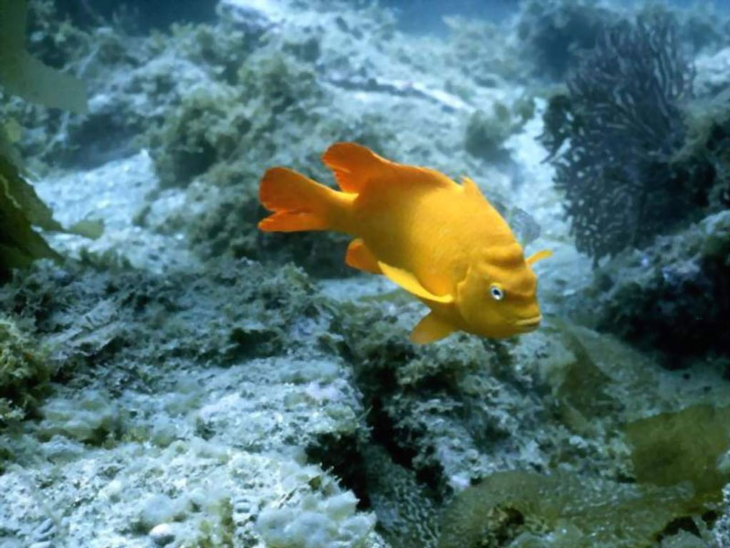 amazing beauty of sea life  beautiful pictures of deep sea