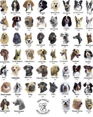 Dog Breeds Breed Types