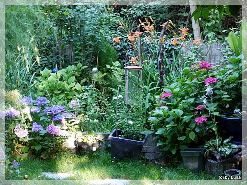 lunas garten rosen vielfalt hortensien und grosses beet. Black Bedroom Furniture Sets. Home Design Ideas