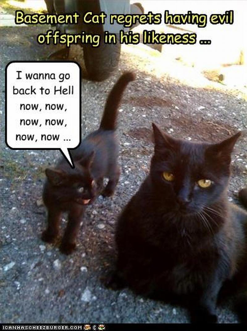 Funny evil cat captions : Bitcoin and ripple news