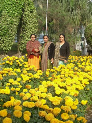 cheetal, haridwar,  nh-58, Delhi,  mussourie, dehradun,rishikesh,monal, parrots, Birds, lunch,dinner,breakfast, food,My mom with my two aunts surrounded with giant marigolds.,If you are traveling from Delhi to Haridwar, Dehradun, Mussourie, or anywhere else in Uttarakhand, one of the best place to stop for a meal is the restaurant Cheetal Grand at midpoint on the route. The food is of acceptable quality and restrooms are clean and hygenic. The landscaping is wonderful. You can find some rare birds and flowers.