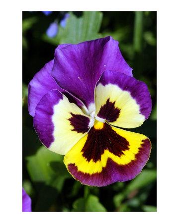 Ephemera: Flower Power