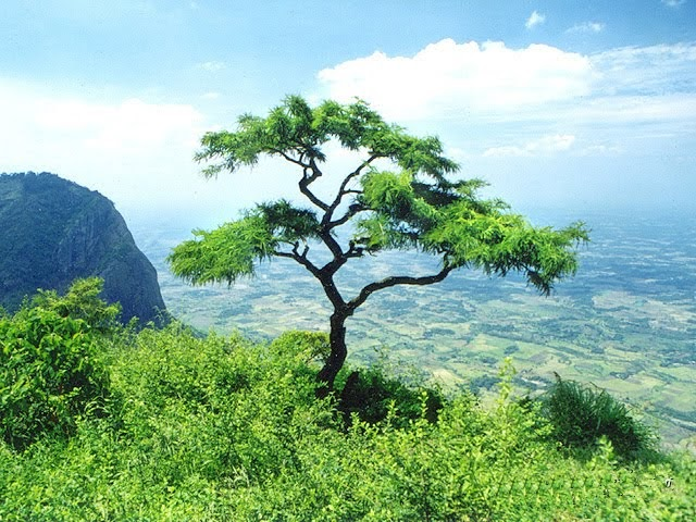 I Love Nature: Beautiful World