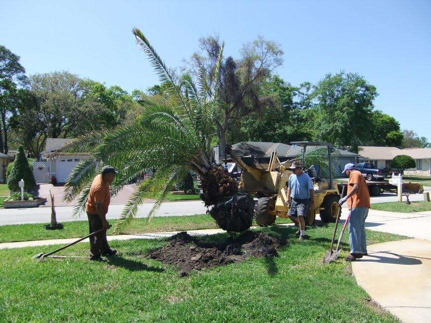 Landscaping ideas with palm trees ~ Ujang Ma on Palm Tree Backyard Ideas id=42353