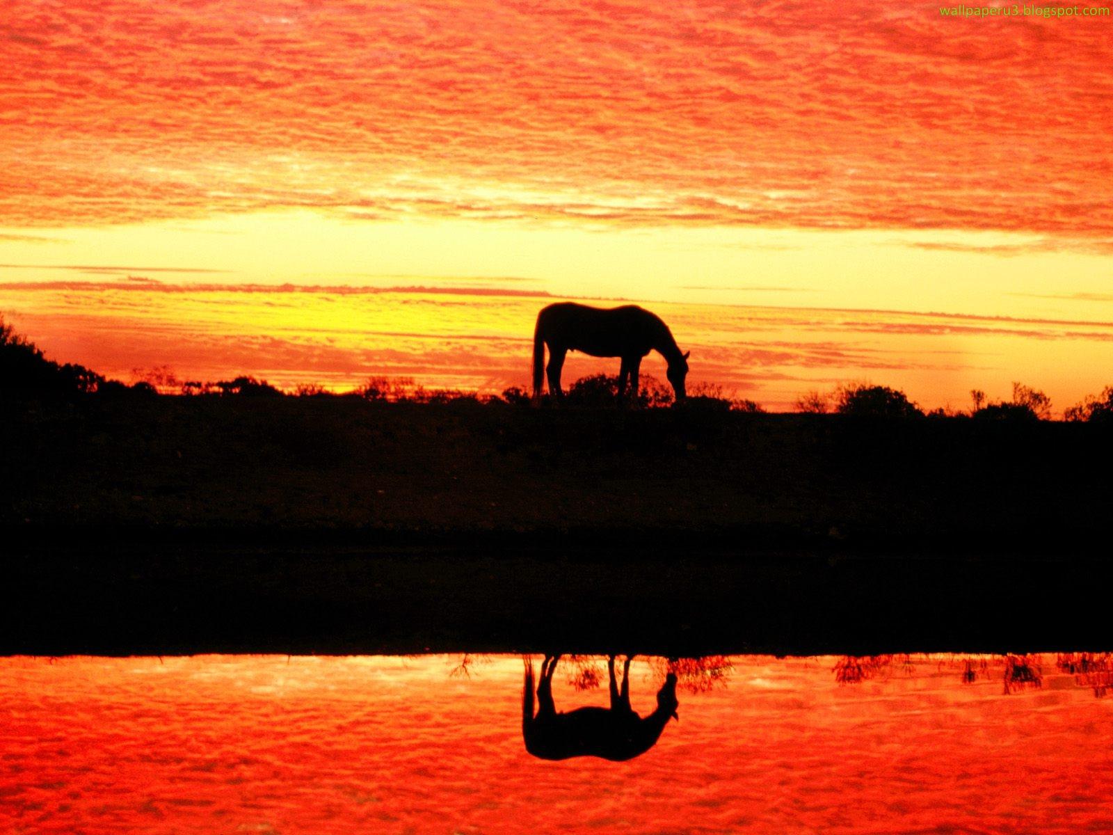 Simple   Wallpaper Horse Sunrise - 1+%2830%29  You Should Have_644976.jpg