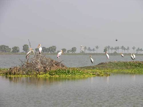 Birds at Kolleru Lake