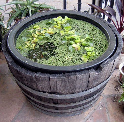 Life on maple grove container water gardening for Container pond filter